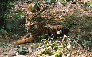 INDIA BANDHAVGARH